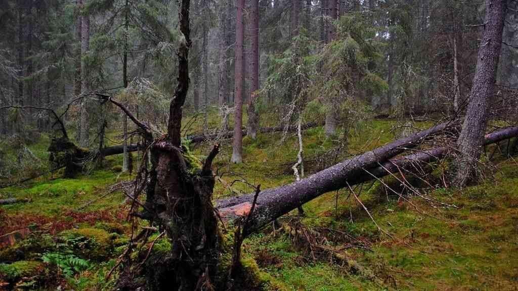 METSO-suojelukriteerit täyttävää kaupungin talousmetsää Pulesjärven lohkolla (Kuvio 258)