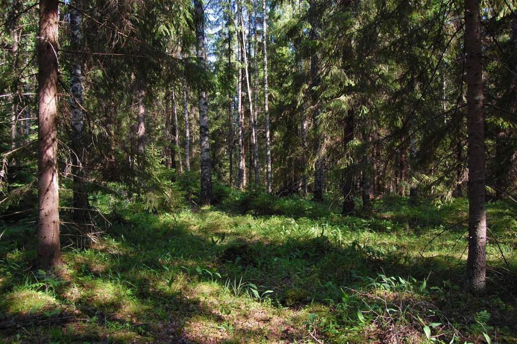 Koukkujärvi_462